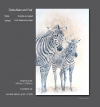 Zebra Mare and Foal